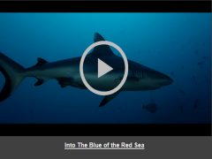 Into The Blue of the Red Sea